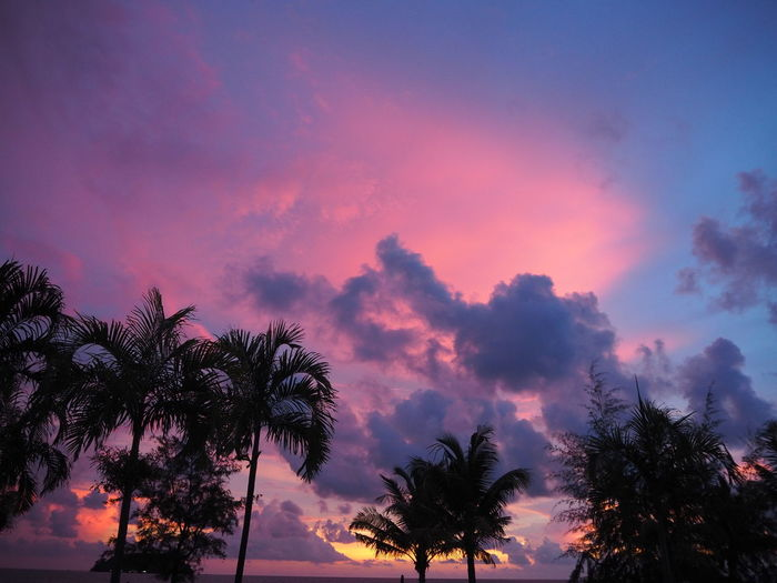 Palm Tree Beauty In Nature Cloud - Sky Coconut Palm Tree Dramatic Sky Growth Idyllic Low Angle View Nature No People Orange Color Outdoors Palm Tree Palm Tree Silhouette Purple Sunset Romantic Sky Scenics - Nature Silhouette Silhouette Palms Sky Sunset Tranquil Scene Tranquility Tree Tropical Climate