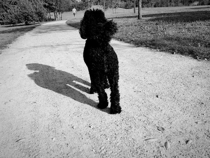 People And Places Shadow Sunlight One Animal Dog Animal Themes Standing Domestic Animals Pets Day Outdoors The Way Forward Black & White Black And White Blackandwhite Nature Park Monochrome Photography