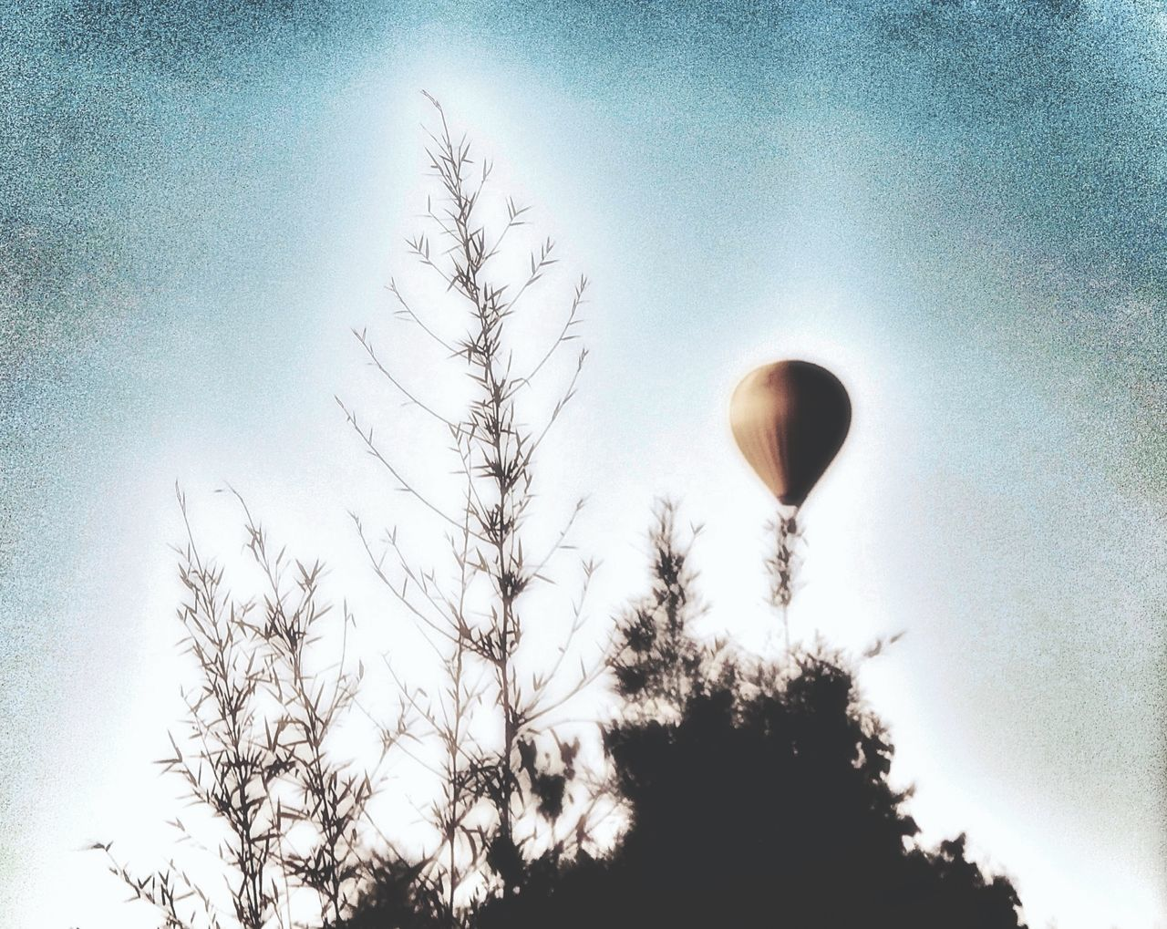 tree, sky, low angle view, silhouette, nature, flying, growth, no people, clear sky, moon, outdoors, beauty in nature, hot air balloon, day