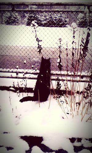 Meine katze um ersten schnee first eyeem photo Postcode Postcards Black And White Friday