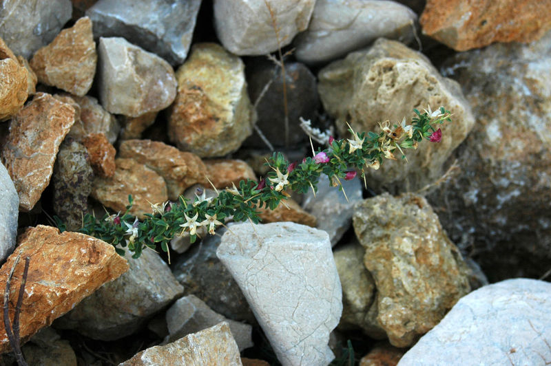 High angle view of flowers growing amidst rocks