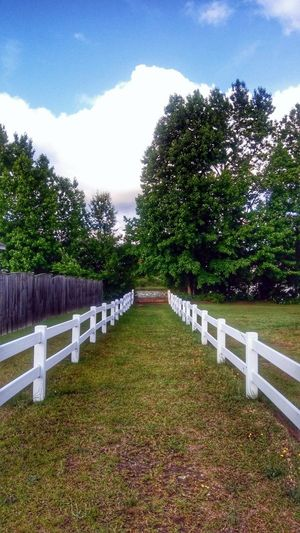 The Long Walk Into Summer Trees Clouds And Sky Nature Nature_collection Fences HDR Hdr_Collection Hdr Edit Tree Sky Grass Green Color Topiary Fence Garden Path Cloud - Sky Overcast Growing