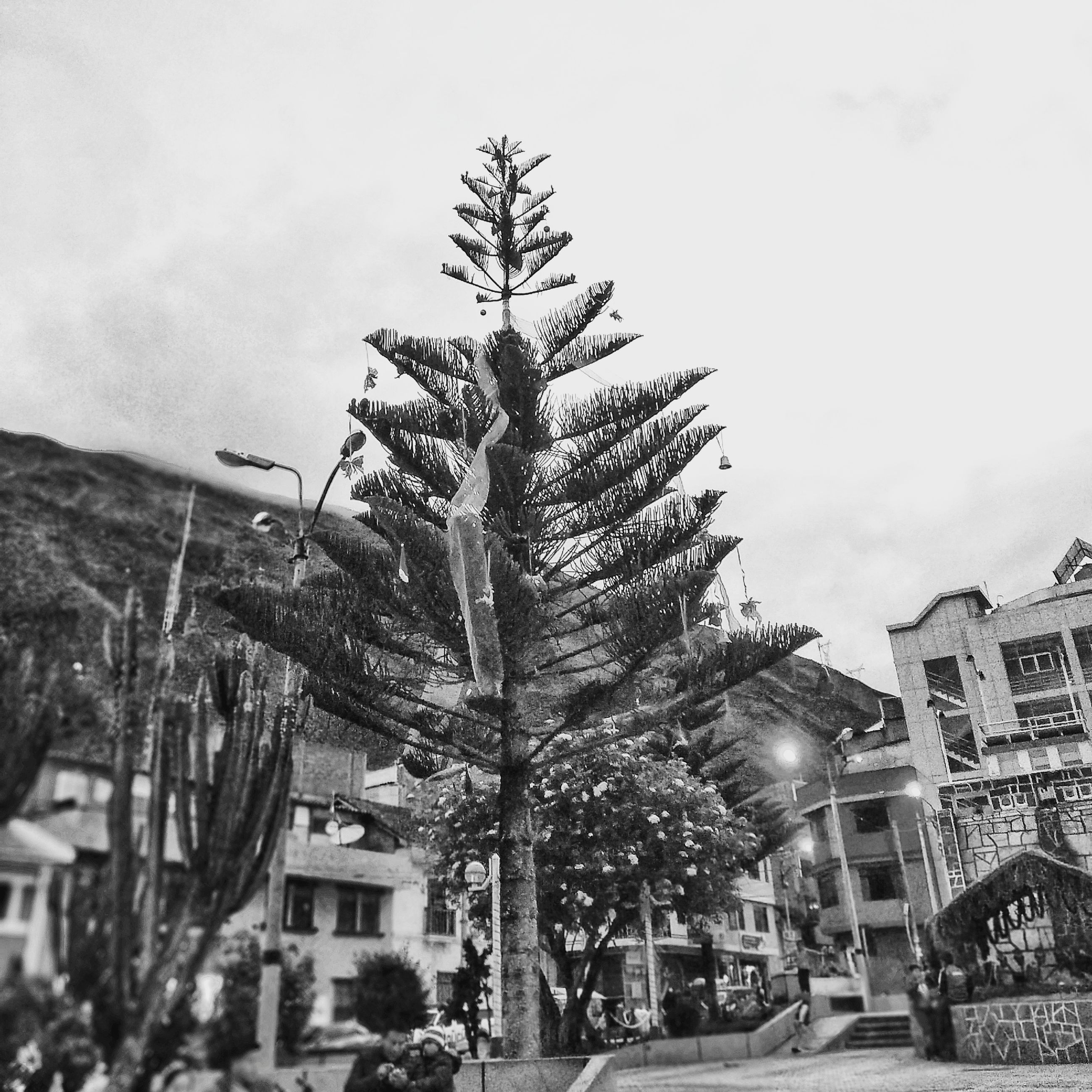 tree, architecture, building exterior, plant, built structure, sky, nature, city, street, building, no people, christmas tree, transportation, christmas, day, mode of transportation, celebration, car, outdoors