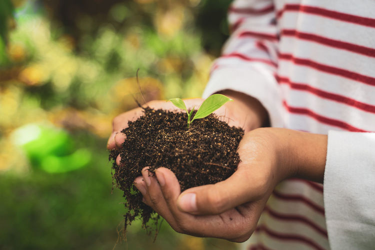 Midsection Of Person Holding Seedling In Soil