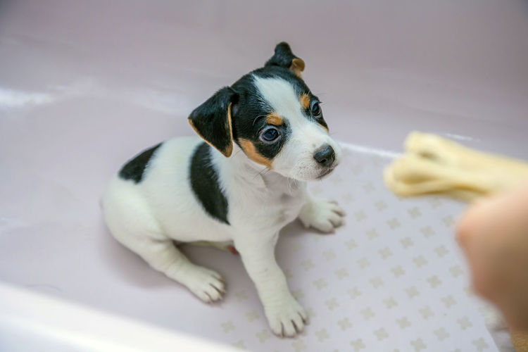 High angle view of puppy on pet bed
