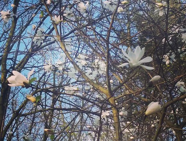 Spring April Tree Nice Day Flowers Billerbeck