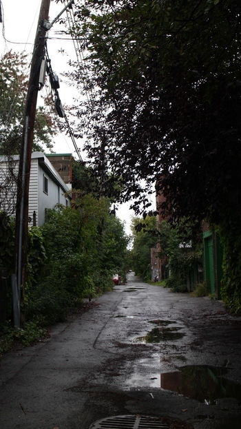 Photos taken around Montreal the fall of 2018. Montréal Lane Way Back Ally Road Garage Garage Door Overgrowth Beauty Telaphone Pole Tree Architecture Built Structure Building Exterior Plant The Way Forward Building Direction No People City Residential District Growth Day House Transportation Plateau-Mont-Royal Outdoors Footpath Street Nature