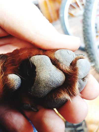 Animal Doggie Paw Cute Dachshund Dachshund Paw Cute Tiny