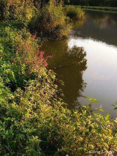 Wasser Teich