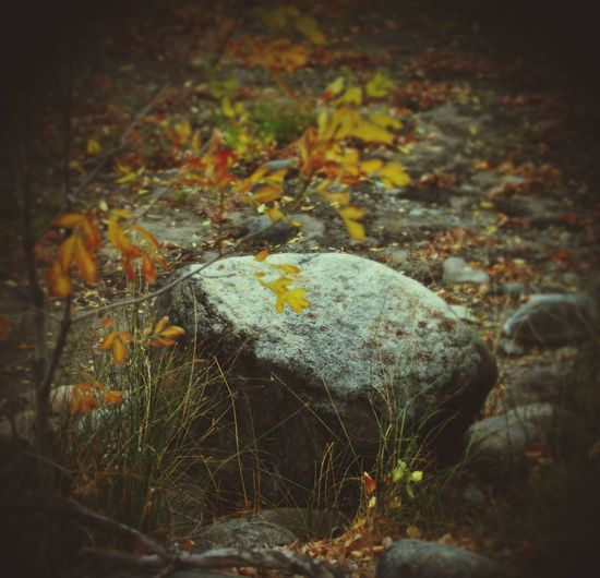 Nature Autumn Close-up No People Day Leaf Outdoors Grass Water Beauty In Nature Rock Boulder Grassy Leaves🌿 Autumn🍁🍁🍁 Small Tree Zen Peaceful Geology Grey Reno, Nevada NEVADA, USA!♡ Sit Textbook Desert Beauty