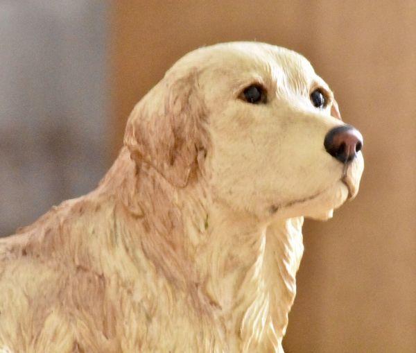 Pot dog One