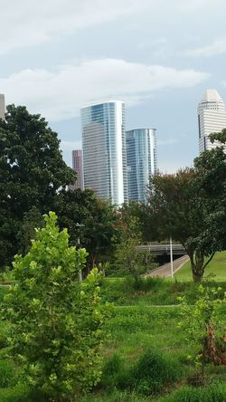 Love when the landscape acts as a frame. Tree Architecture Building Exterior Built Structure City Skyscraper Sky Green Color Growth Tall - High Modern Outdoors Scenics Eyemphotos Colorful Beauty In Nature Nature Popularphotos Houston Texas Photosonthestreet No People