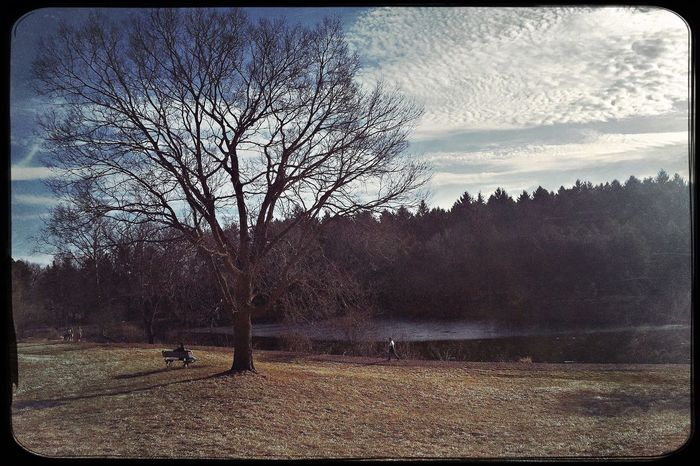 An atypical 68°F at the Morton Arboretum. Tree Bare Tree Sky Nature Tranquility Tranquil Scene Beauty In Nature Landscape Scenics Outdoors No People Field Branch Day Hipstamatic The Great Outdoors - 2017 EyeEm Awards