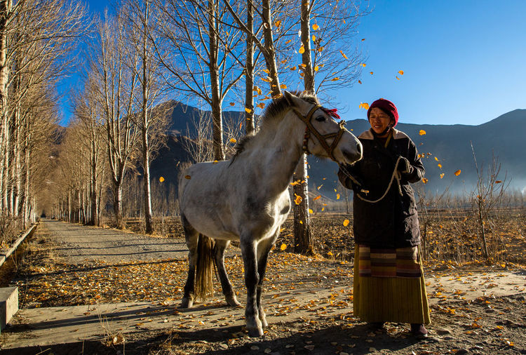 Domestic Mammal Domestic Animals Pets Real People Tree One Animal Vertebrate One Person Livestock Standing Lifestyles Horse Nature Land Warm Clothing Herbivorous Outdoors Woman Fall Leaves Winter Tibet Tibetan  Tibet Travel