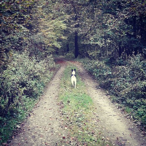 Animal Themes Nature Outdoors Naturephotography Naturelovers Trees And Plants  Trees And Nature Walking In The Woods Walkingthedog Walking The Dog Relaxation Tranquility Beauty In Nature Nature Forest Tree Staffycross Cute Dog  Dogsofeyeem Bestone Dogslife Dogmodel Cute Pets