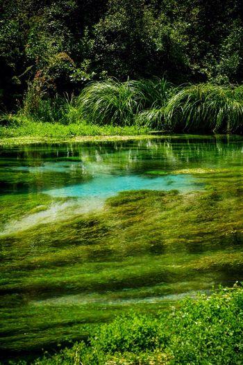 The Blue Pools. Putararu near Rotorua  New Zealand New Zealand Scenery Clean And Green New Zealand Landscape Summer Views Popular Tourist Attraction  River Riverbank Natural Beauty Natural Spring Water