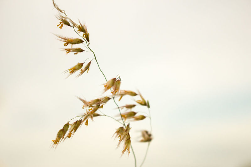 Beauty In Nature Blown Blown Glass Close-up Cloudy Cloudy Day Day Dried Plant Grass Nature No People Outdoors Plant Selective Focus Sky Twig Wind Wind Blowing