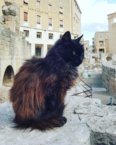 Pets Domestic Animals One Animal Built Structure Sitting Domestic Cat Outdoors Mammal Building Exterior City Cat Cats Of EyeEm Lecce Lecce - Italia Lecce City