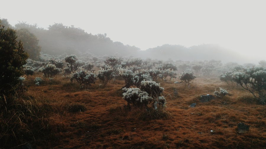 Surya Kencana, Gede Mountain.Been There. Nature Tree Fog No People Landscape Outdoors Cold Temperature Beauty In Nature Scenics Winter Day Sky Mountain Grass The Week On EyeEm