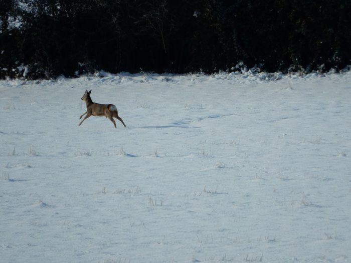 Deer Wildlife Nature Snow Uk Countryside