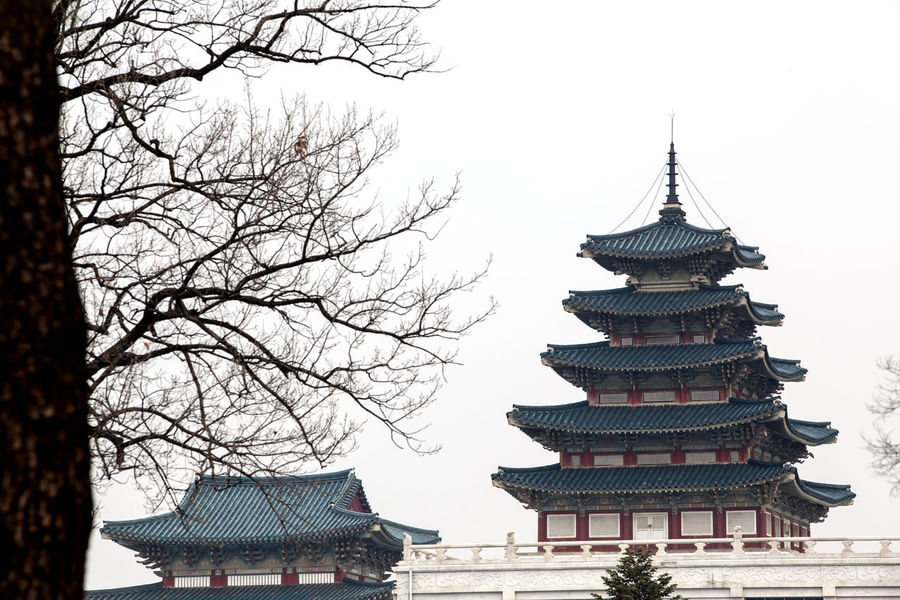 Architecture Building Exterior Built Structure Clear Sky Culture Cultures Day Gyungbok Palace Historic Place Korean Traditional Architecture Low Angle View National Museum Outdoors Palace Place Of Worship Religion Roof Sky Spirituality Temple Temple - Building Tradition Travel Destinations Tree