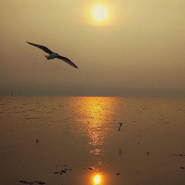 บางปู Xiaomi Xiaomiphotography Bangpu Sunset Twilight Evening Dusk Instasky Adayinthailand Snapseed Thailand_allshots Igerth Igersthailand Sea Seascape Silhouette Insta_global Ig_thailandia Thailand Travelgram