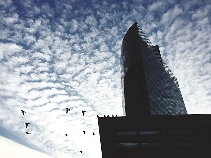 Architecture Building Birds Clouds And Sky Clouds Sky Blue Sky Open Edit The Moment - 2015 EyeEm Awards The City Light