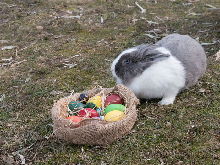 High Angle View Of Rabbit And Easter Eggs On Field