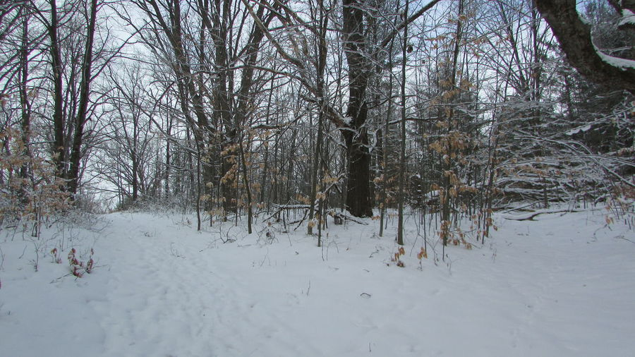 Walking Through The Woods Winter Wonderland Which Way To Go? Diggins Trail Silence Speaks Eerie Beautiful Cadillac Michigan