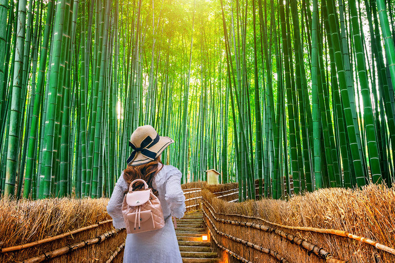 Woman walking at Bamboo Forest in Kyoto, Japan. Plant Tree Green Color Nature Beauty In Nature Land One Person Forest Leisure Activity Bamboo - Plant Adult Bamboo Grove Tranquility Lifestyles Bamboo Environment Women Tranquil Scene Young Adult Outdoors