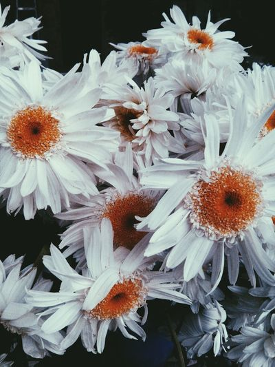 First Eyeem Photo Showcase July Flowers White White Color Cold Days Margaritas Mexico Flowerporn Flower Collection Plants Are Friends For U What's On The Roll Home Is Where The Art Is A Bird's Eye View Ice Age Close-up EyeEmNewHere The City Light The Still Life Photographer - 2018 EyeEm Awards The Fashion Photographer - 2018 EyeEm Awards The Traveler - 2018 EyeEm Awards The Great Outdoors - 2018 EyeEm Awards The Street Photographer - 2018 EyeEm Awards