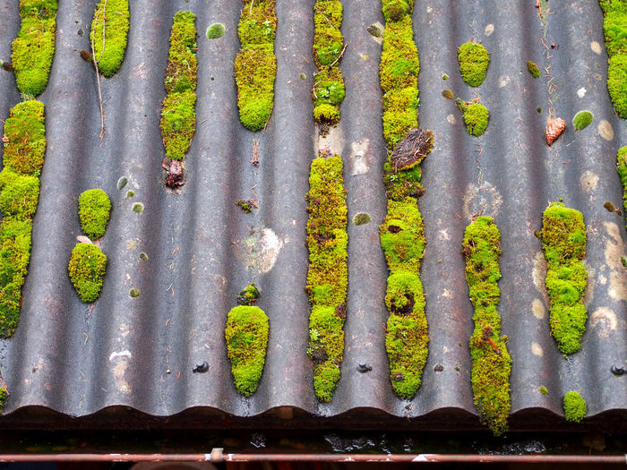 Moss on the roof top Nature Day Outdoors Weathered Dirt Pattern Plant Moss Metal Growth Close-up Barrier Side By Side No People Green Color Backgrounds In A Row Full Frame High Angle View Rooftop Corrugated Sheet Metal