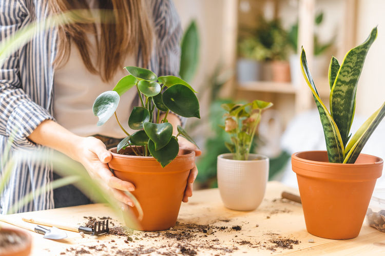 Midsection of woman with potted plant on table