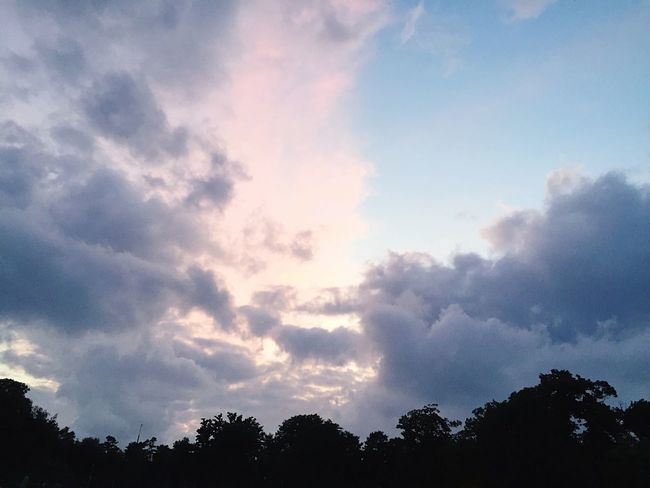 Pink and Blue Clouds and Sky making Contrast with Black Trees