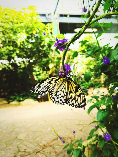 Flower Butterfly - Insect Insect Animal Markings Close-up Plant Butterfly Animal Wing Pollination Plant Life Flapping Blooming