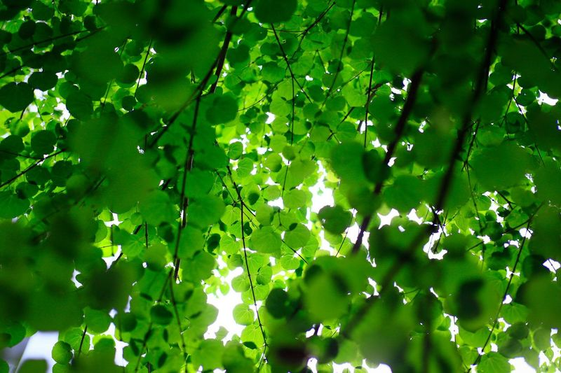 Green Color Leaf Growth Nature Day No People Outdoors Beauty In Nature Freshness Close-up Branch Tree