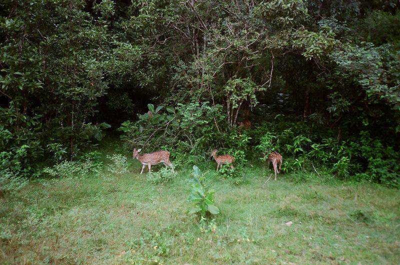 Deer Deers