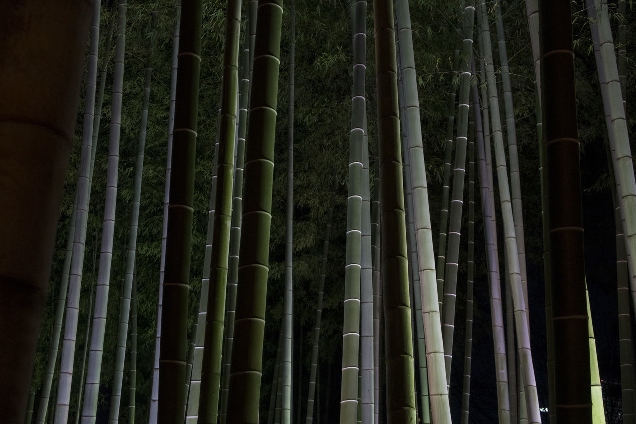 bamboo - plant, bamboo, no people, plant, land, forest, bamboo grove, tree, nature, beauty in nature, growth, full frame, tranquility, outdoors, tree trunk, trunk, low angle view, day, backgrounds, green color