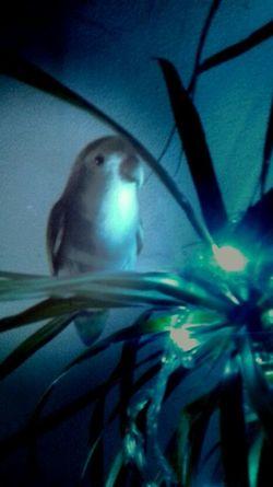 Nature First Eyeem Photo Art, Drawing, Creativity Piriquito Lovebird Mybird Plant Inside Animal Bird Silence Edit UnderSea Underwater Close-up