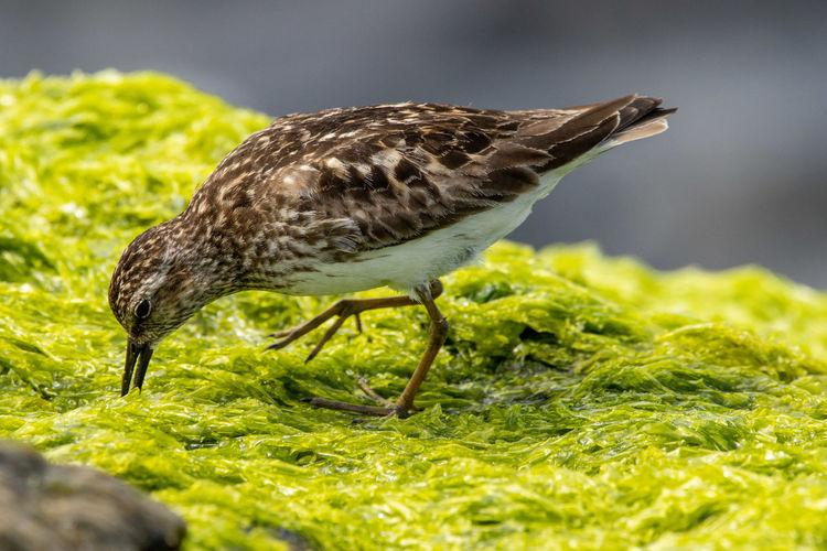Close-up of bird eating grass