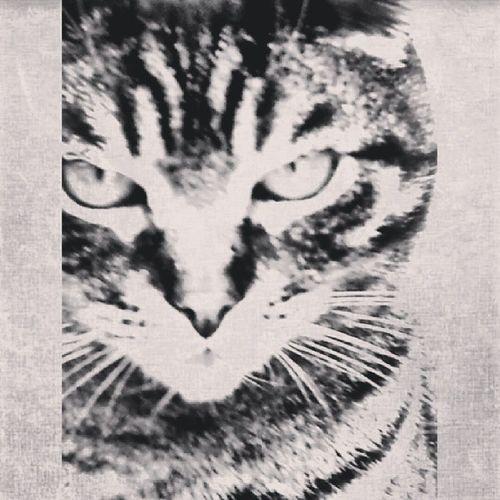 Black n white cat