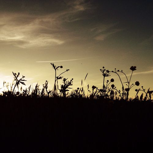 Silhouette of plants on field against sky at sunset