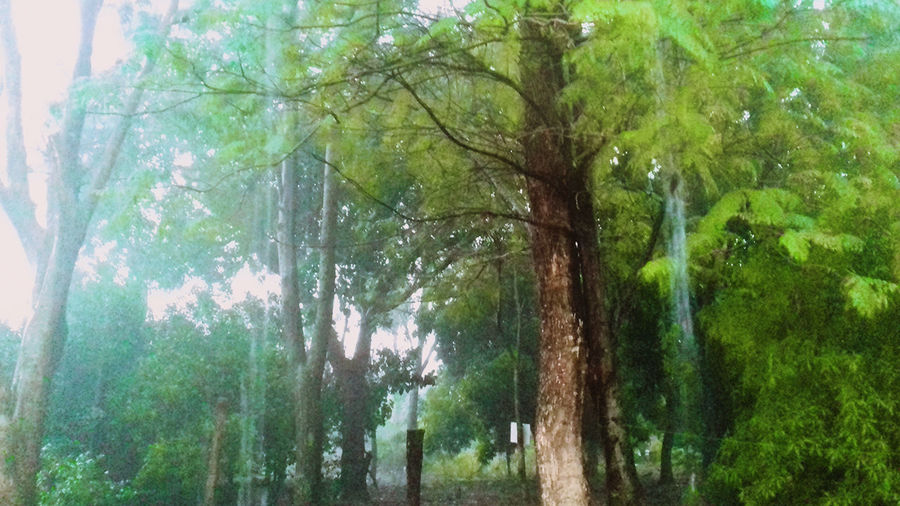 Pluviophile Green Color Beauty In Nature Trees