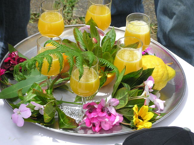 Cocktail Dring Drinking Glass Flower Head Food And Drink Freshness Healthy Eating Nature No People Refreshment Yellow Food Stories