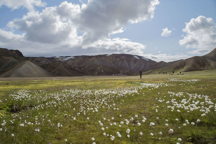 Camping Iceland Trekking Tundra Cloud - Sky Field Flower Flowers Grass Landscape Mountain Nature North Outdoors Scenics Sky Tranquil Scene Tranquility