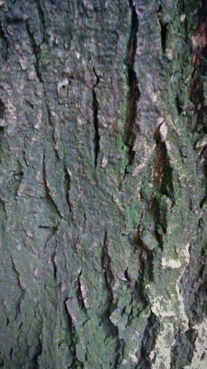 Bark Trees Tree Bark Tree Bark Texture Tree Bark Patterns Moss & Lichen Tree Bark Moss