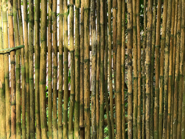 Backgrounds Bamboo Bamboo - Material Bamboo - Plant Barrier Boundary Close-up Day Fence Full Frame Green Color Growth Iron No People Outdoors Pattern Plant Repetition Textured  Tree Wood - Material