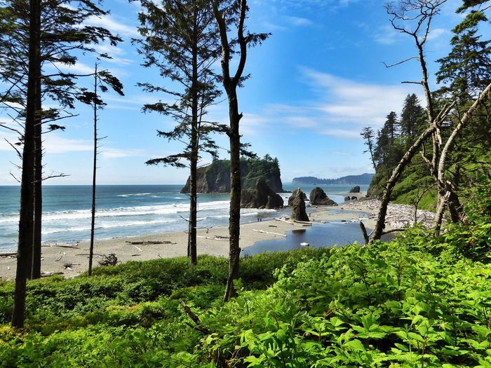 Sea Beach USA Washington Ruby Beach Naure Shot Nature Beauty In Nature Tree Water Scenics Sky Tranquil Scene Tranquility No People Landscape Day Growth Outdoors Scenery Horizon Over Water Blue Sky