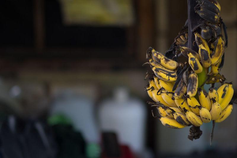 Yellow Hanging