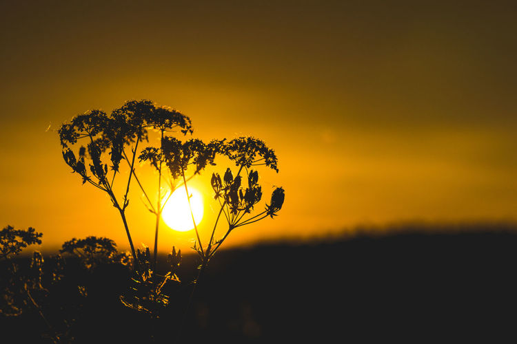 Sunset Sky Beauty In Nature Plant Orange Color Growth Silhouette Scenics - Nature Yellow Field Sun Nature Tranquil Scene Tranquility No People Land Idyllic Sunlight Landscape Non-urban Scene Outdoors EyeEm Best Shots EyeEm Selects EyeEm Nature Lover EyeEm Gallery My Best Photo